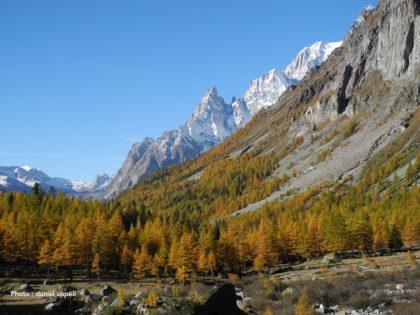 Mélèzes du Val Ferret italien.