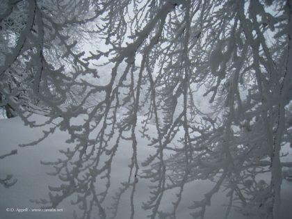 Arbres couvert givre dans les Bauges.