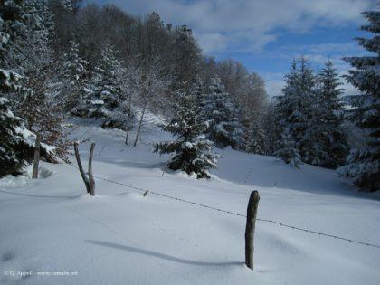 Randonnées acccompagnées dans les Alpes du nord : les Bauges.